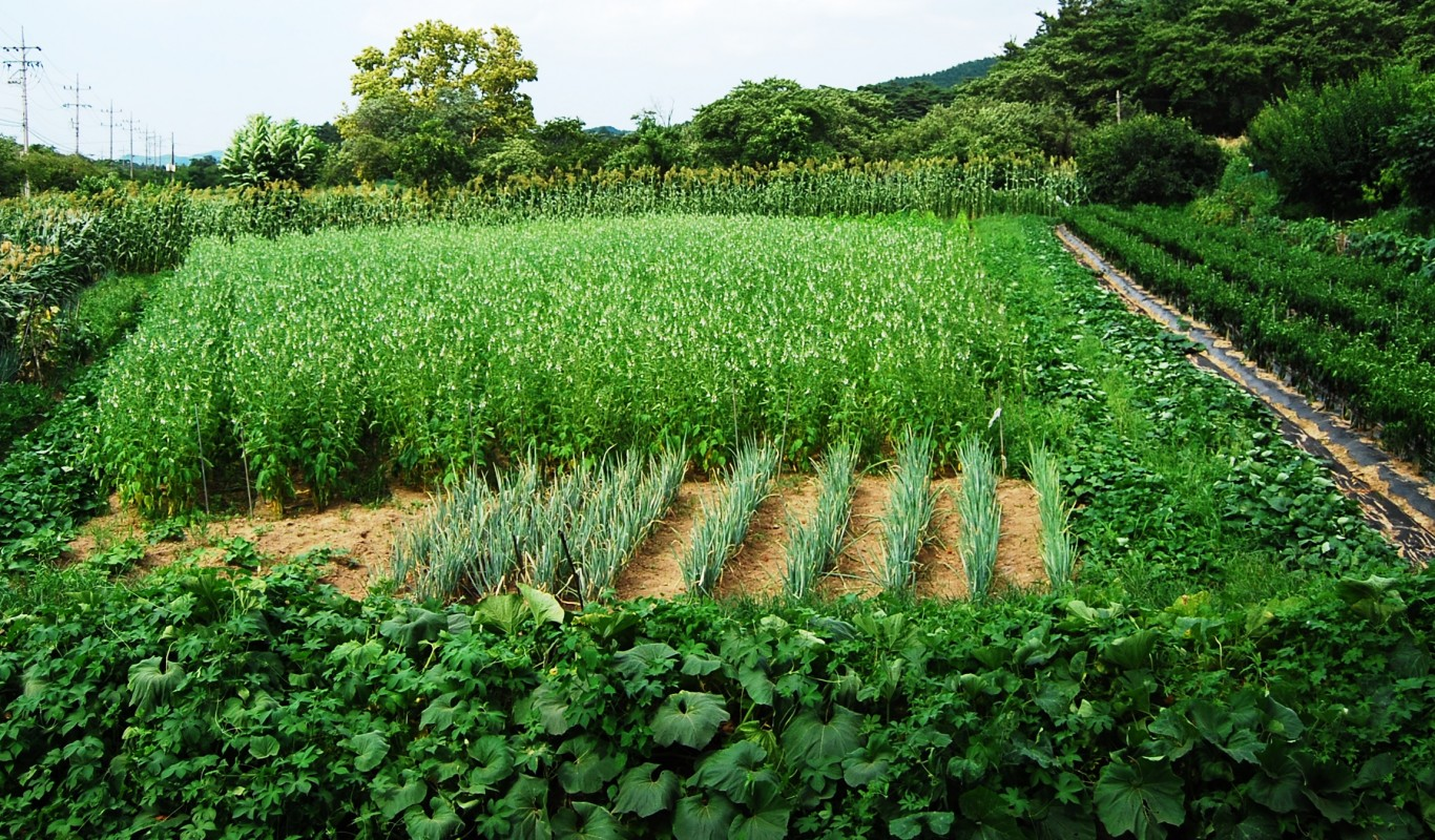 organic farming in korea-beating pesticides, parasites and pathogens